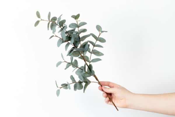Eucalyptus colour inspo
