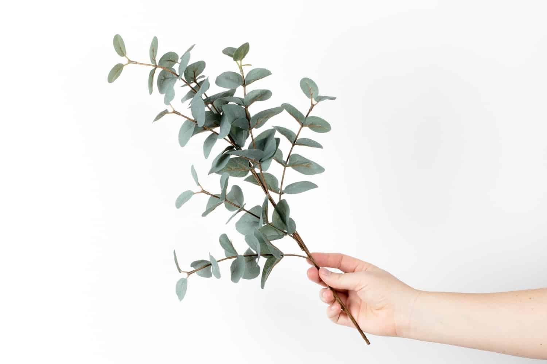 Eucalyptus colour inspo